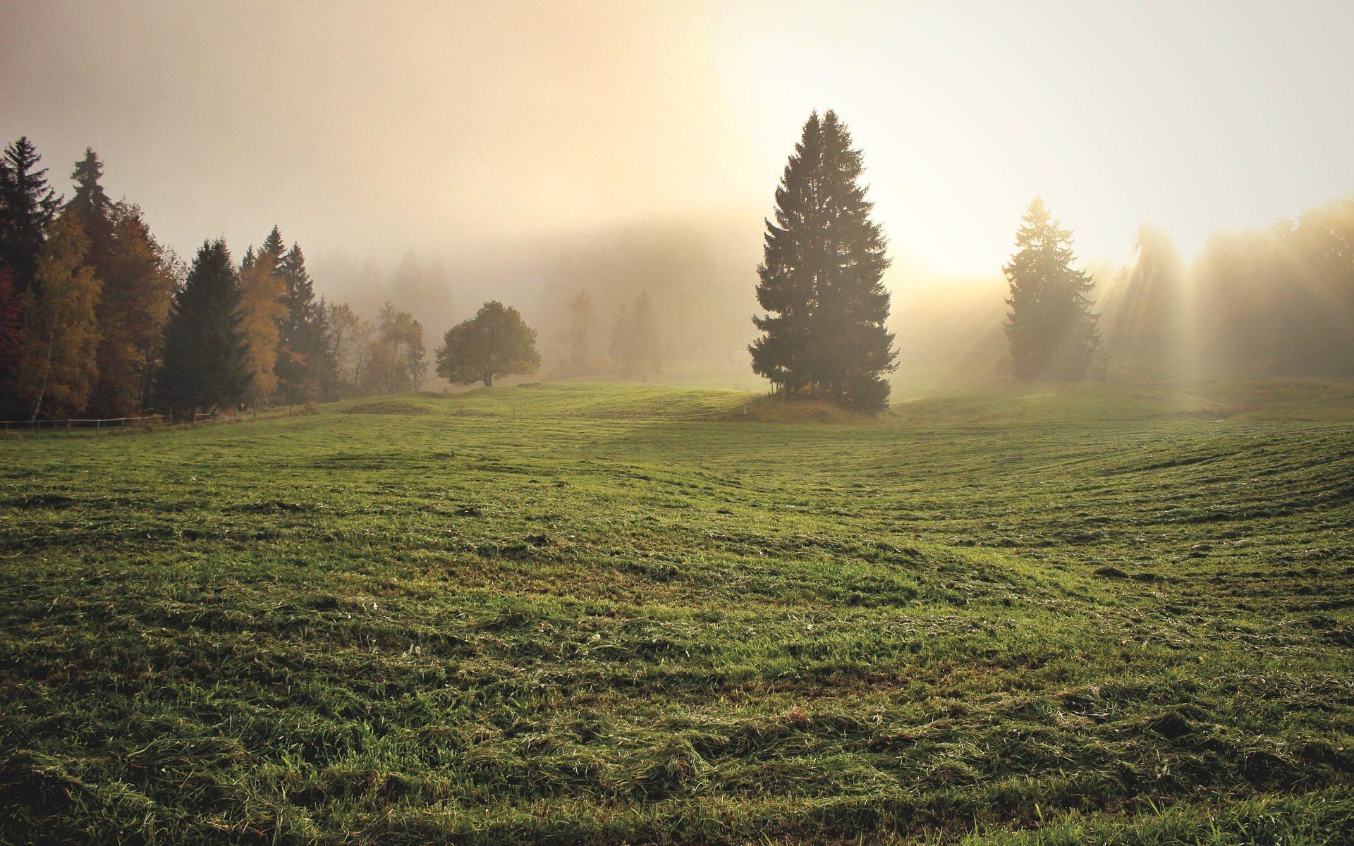 Juralandschaft im Nebel – Pascal Pointet Feldenkrais